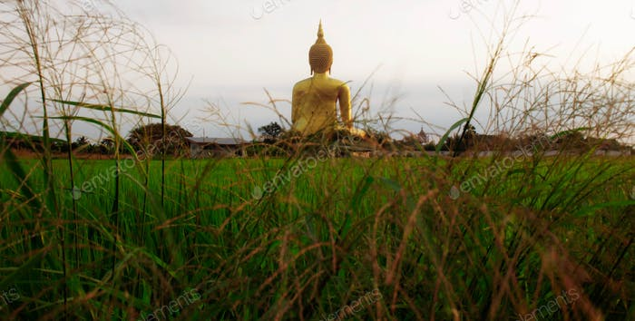Buddha with grass on field