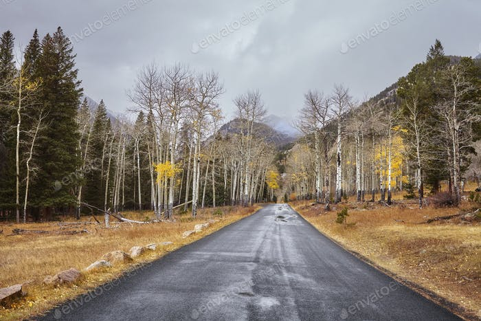 Autumn road after the rain.