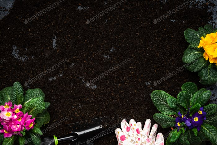 Gardening Activity, Hobby and Lesure at Early Spring in Garden. Copy Space Background