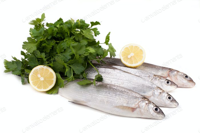 Freshwater Whitefish