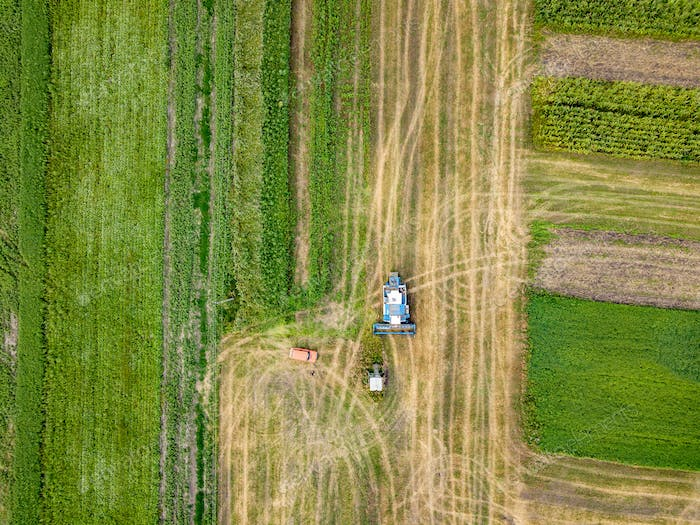 Agricultural field after harvesting and combine harvester reaps a crop, red car on a field. Aerial