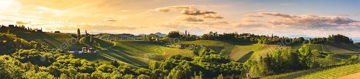 Панорама виноградников в Южной Штирии, летний сезон