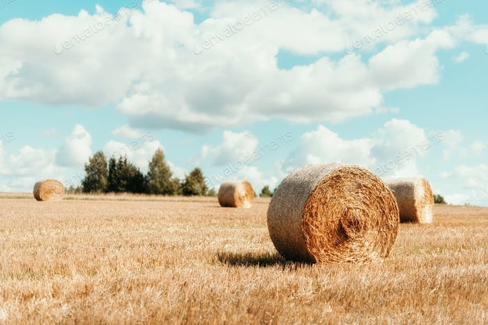 Agriculture background with copy space. Harvested field with straw bales. Summer and autumn harvest