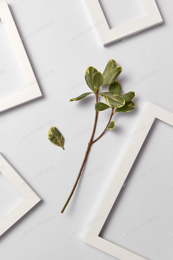 Natural organic ficus branch and empty decorative frames on a light background