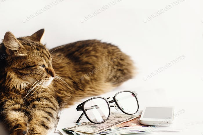 cute cat sitting sleeping on table with glasses phone and paper