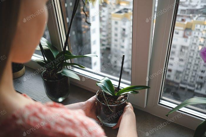 Frau arrangiert Blumen im Haus