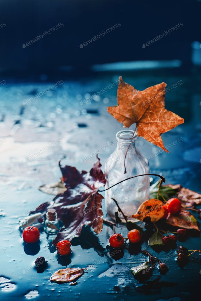 Autumn still life with glass bottle, drops of rain, maple leaves and berries on a wet background