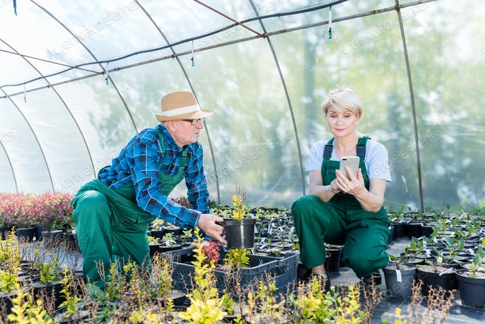 Gardeners selecting plants in a greenhouse.