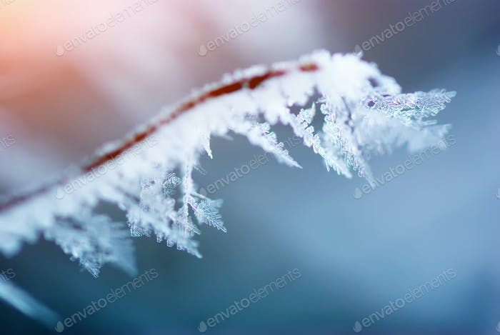 Macro of rime on branch of bush.