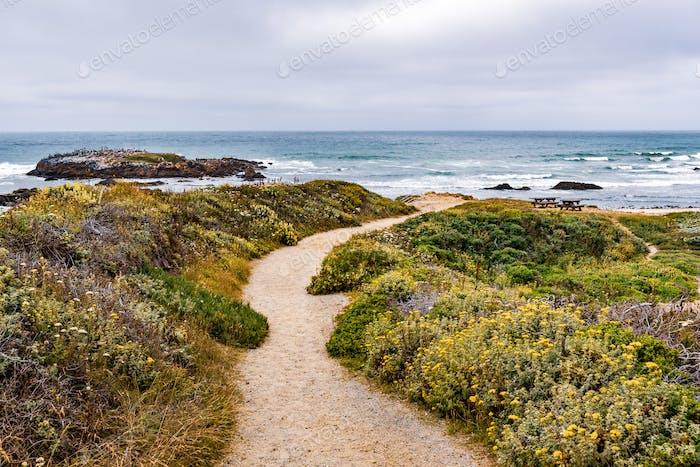 Walking path on the Pacific Ocean coastline, Pescadero State Beach, California