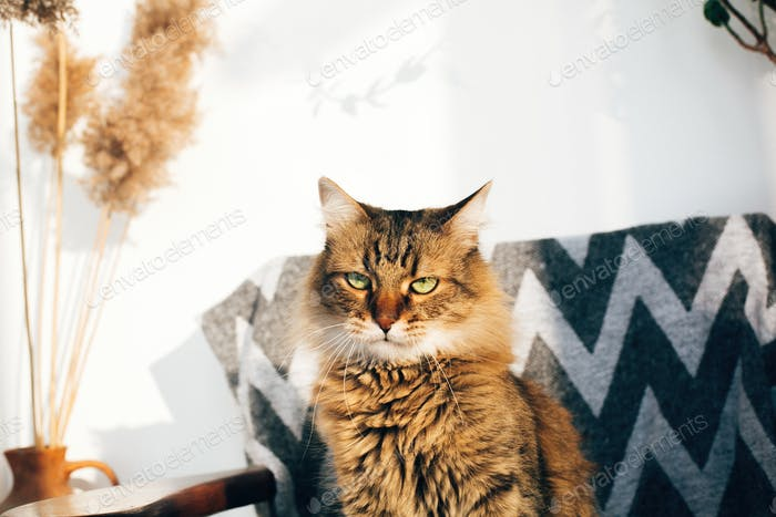 Cute tabby cat sitting in stylish chair in sunny room
