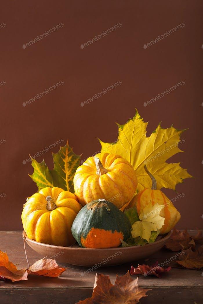 dekorative Mini-Kürbisse und Herbstblätter für Halloween