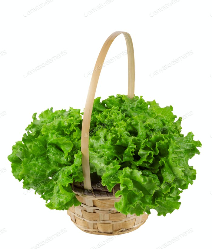 The leaves are succulent green salad in a basket isolated on whi