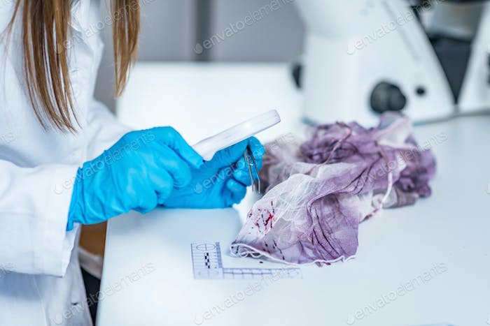 Forensic science expert examining traces of blood on a piece of
