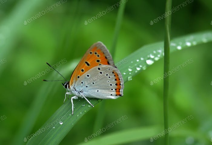 Beautiful butterfly sitting on leaf