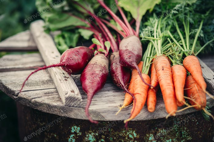 Fresh vegetables, carrots and beets