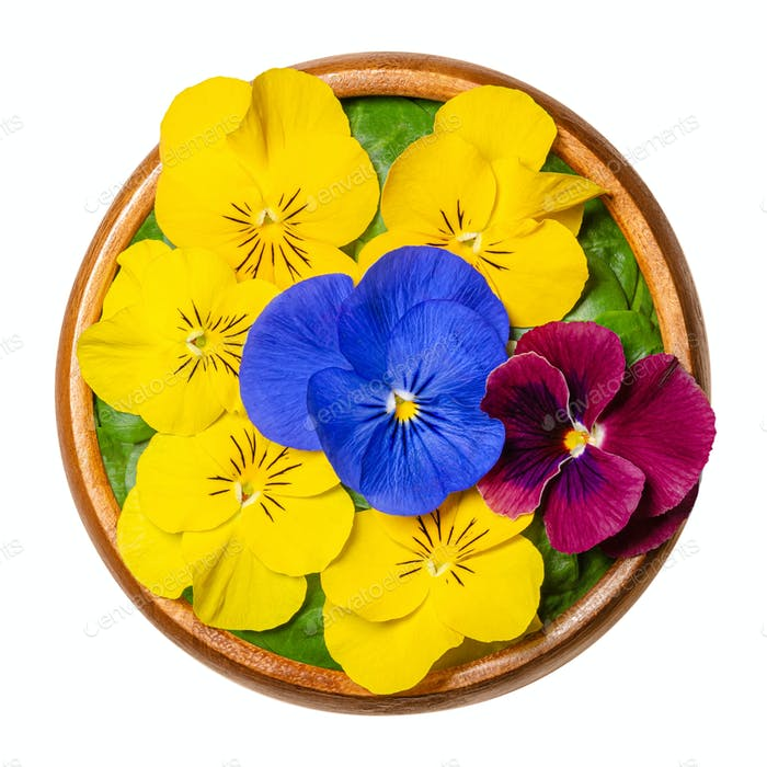 Fresh edible flowers, horned pansy over field salad leaves in wooden bowl