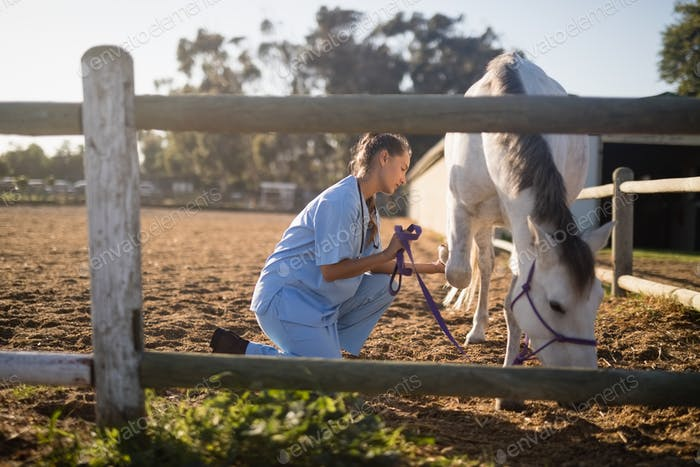 Side view of female vet holding horse rope