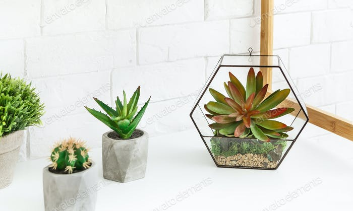 Florarium vase with succulent plants and cactuses in pots on table