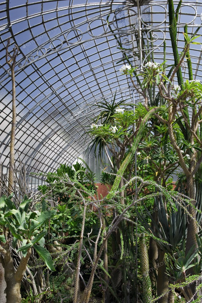 Interior of a vintage greenhouse