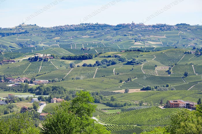 Green countryside, Langhe hills in Piedmont, Italy