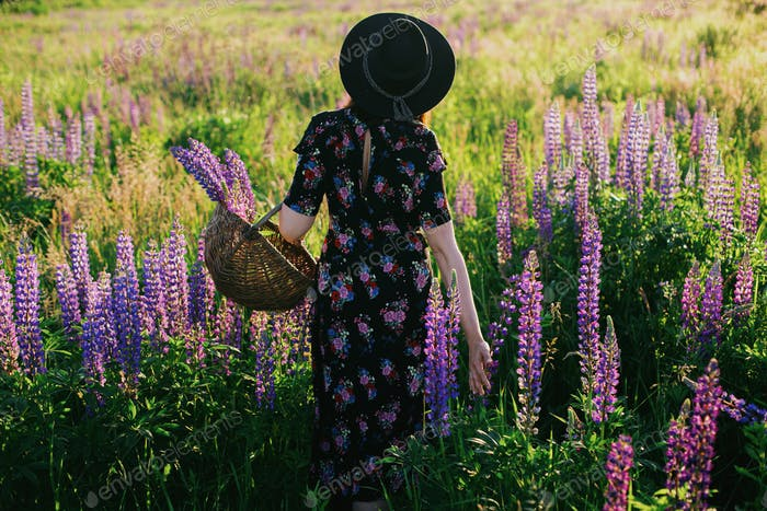 Beautiful woman gathering lupine in wicker basket in sunny field. Tranquil atmospheric moment