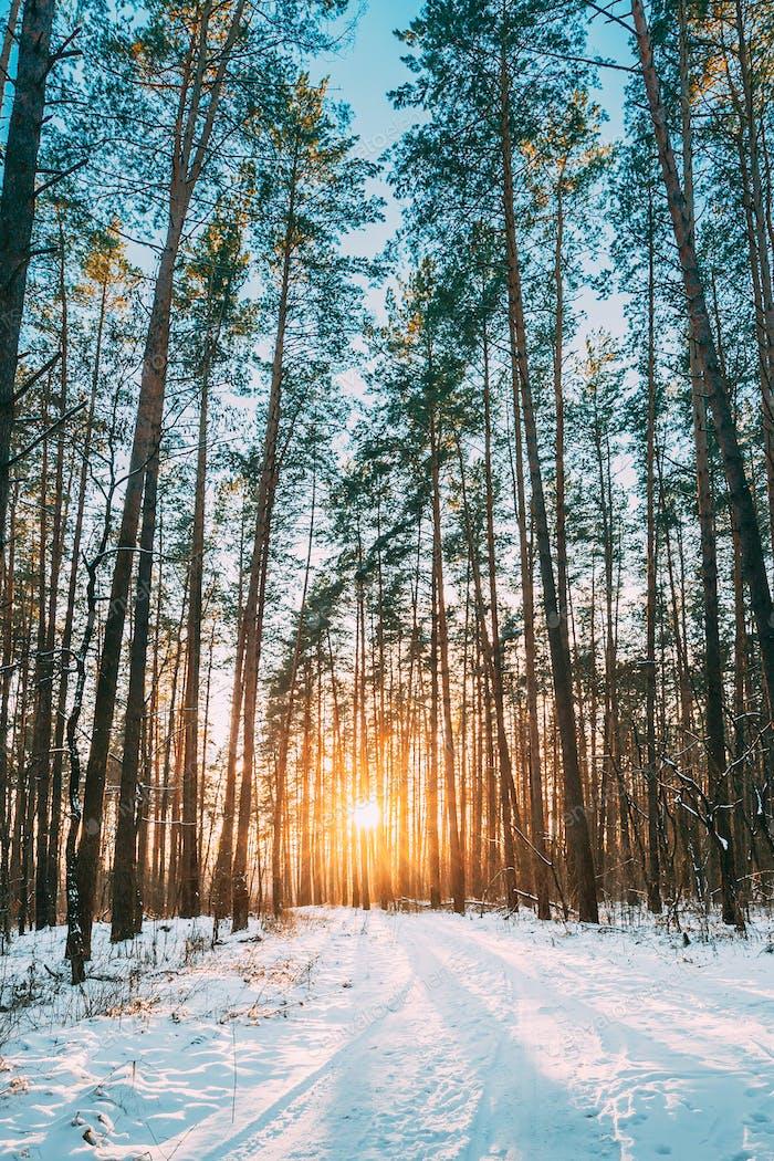 Beautiful Sunset Sunrise Sun Sunshine In Sunny Winter Snowy Coni