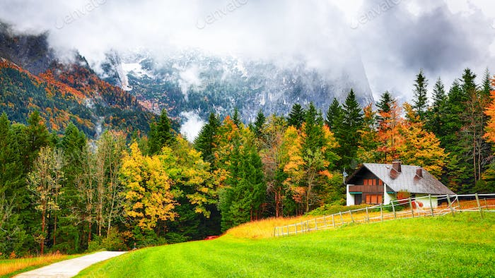 Alpine forest at autumn near Grundlsee lake.