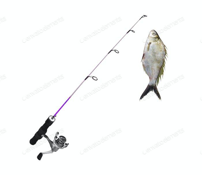 fish on fishing-rod isolated