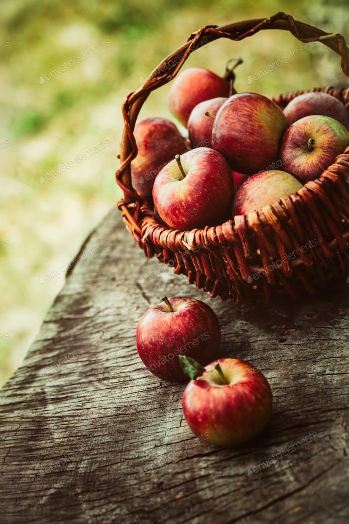 Frische Bio-Äpfel