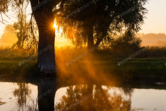 Beautiful foggy spring dawn on a river with trees