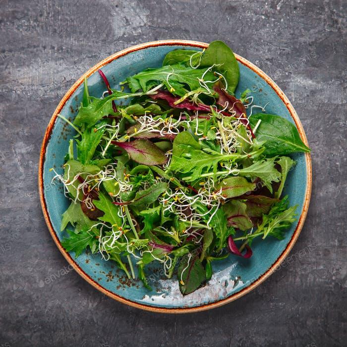 Fresh Green mix Salad with  Microgreen.
