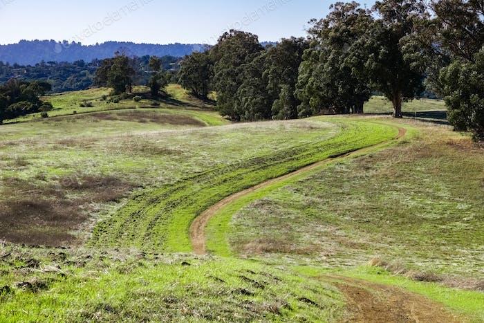 Hiking trail on rolling green hills