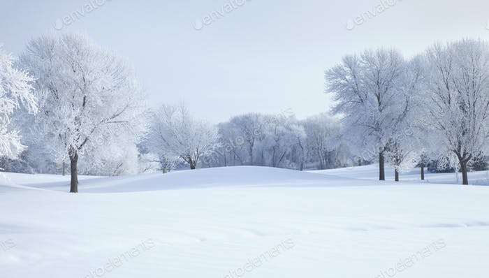 Trees covered with hoar frost on bright winter morning in Minnesota