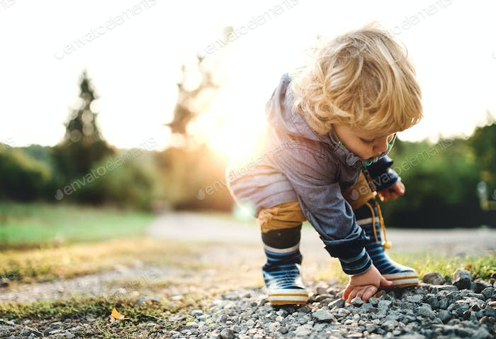A little toddler boy picking up stones in nature at sunset. Copy space.