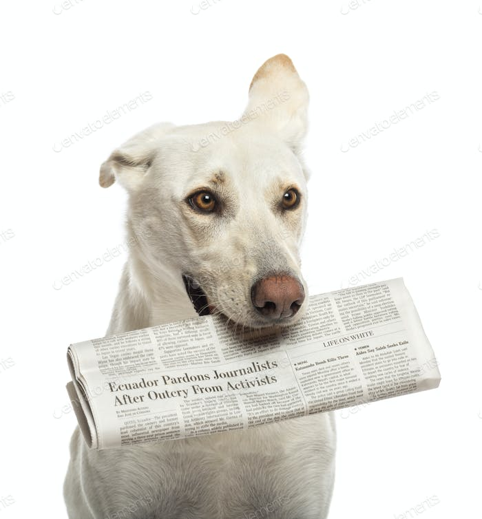 Crossbreed dog holding newspaper in its mouth against white background