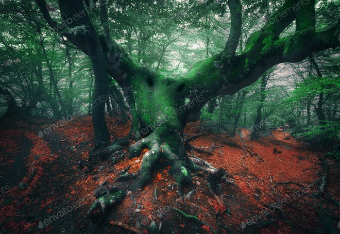 Scary tree. Mystical dark foggy forest
