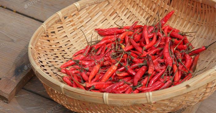 Drying chill pepper under sunlight