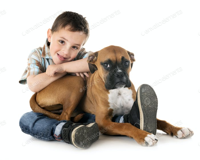 puppy boxer and child