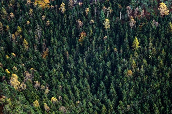 Waldlandschaft des Nationalparks Böhmische Schweiz. Pravcicka Tor, Tschechische Republik