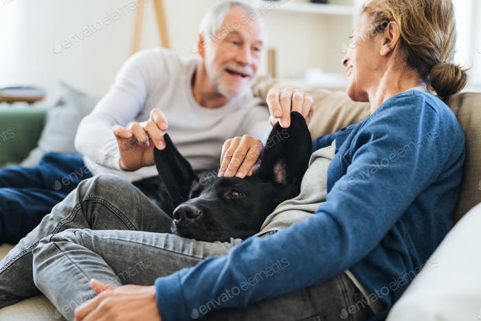 A happy senior couple sitting on a sofa indoors at home, playing with a dog.