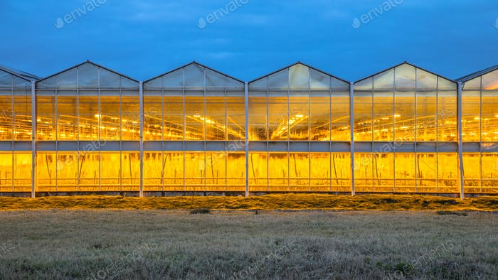 Illuminated industrial greenhouse