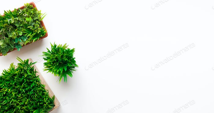 Mockup of evergreen plants in different pots, free space