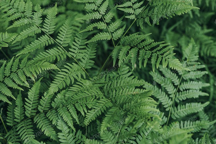 Green fern leaves in the forest textured natural background
