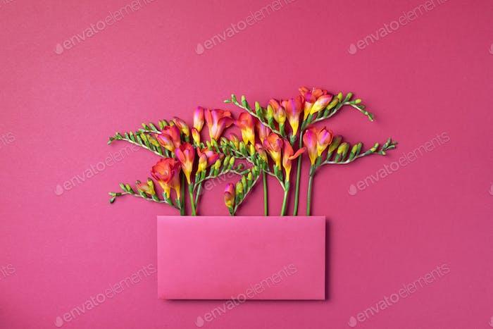 Rote und gelbe Freesie Blumen im Umschlag auf rosa Hintergrund. Ansicht von oben