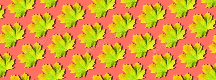 Creative layout of colorful autumn leaves. Banner with yellow, orange and green maple leaves pattern