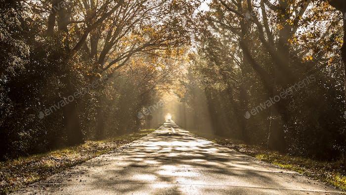 Sun harps on misty morning road