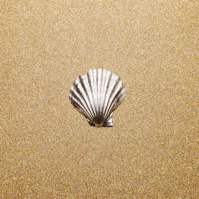 Shell on a gold background. Minimal art