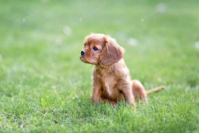 Cute puppy sitting on the grass