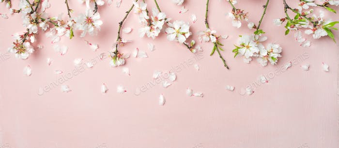 Spring almond blossom flowers over light pink background, wide composition